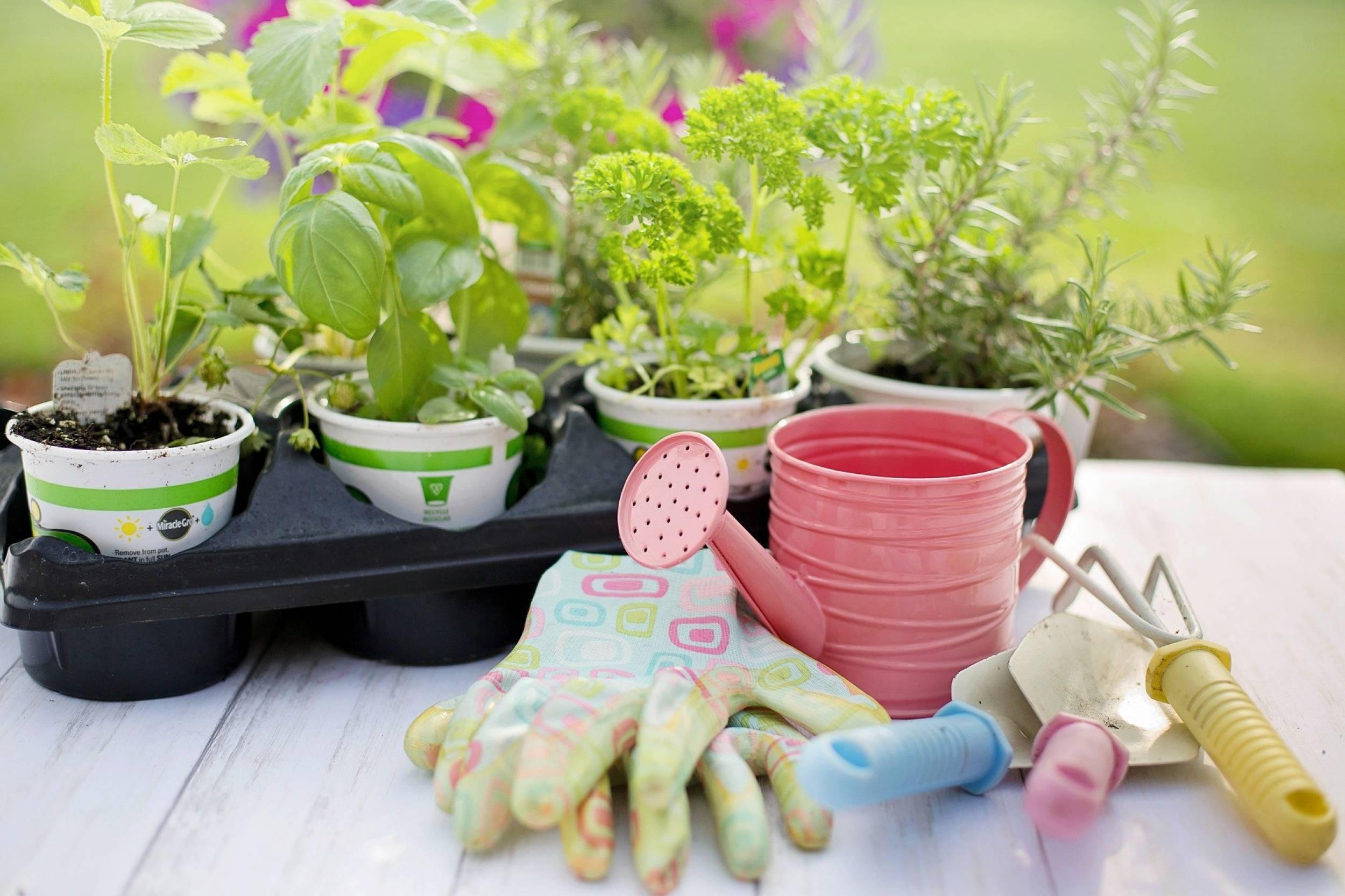planting-4226838_1920